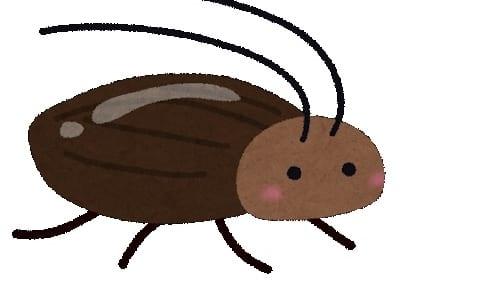 【決定版】ゴキブリの裏技まとめ|簡単に退治・寄せ付けない方法